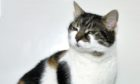 Milly the Asda cat gets new home