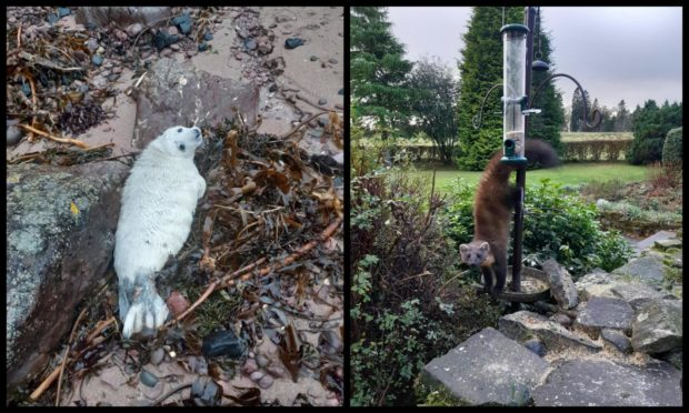 A stranded seal pup and a pine marten stuck in a bird feeder were among some of 2020's most unusual rescues.