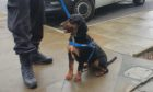 Police dog Ted joined the operation in Tillydrone and Seaton.