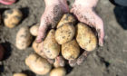 Potato producers need to put aside their aversion to paying tax and consider the industry's future.