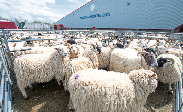 12% more sheep were sold by ANM in 2020.