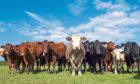 The livestock dashboard will allow Scottish farmers to improve the profitability of their herds.