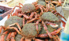 UNAPPETISING: Spider crabs are now being called Cornish king crabs by fishermen to make them more attractive to UK diners.