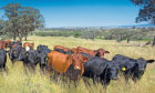 Australian farmers have successfully made the argument that farming can offer a unique solution to climate change.