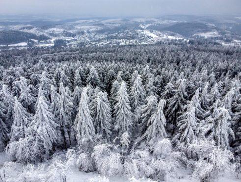 Ice rain, frozen fog and snow sit on the trees in the Taunus region near Frankfurt, Germany.