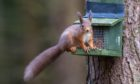 It's hoped the efforts  will improve the diet of red squirrels.