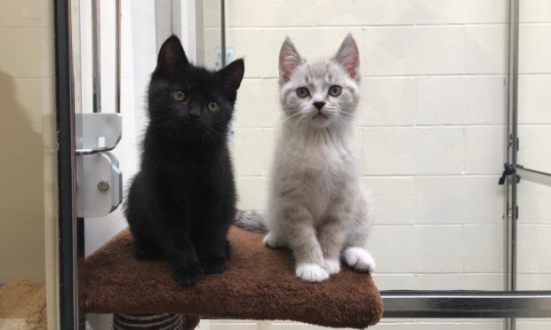 The Scottish SPCA is appealing for cat food donations.