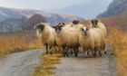 The Crofting Commission is preparing a report on assignations.