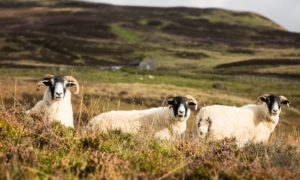 Once the Highlands were cleared of wildlife to make way for sheep, now the situation could be reversed, writes Jim Hunter