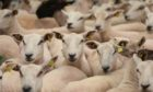 The new mechanism will bring an estimated £1.2m in lost red meat levies back to Scotland.