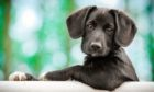 Dog owners have been urged to take pictures of their pooches distinguishing features