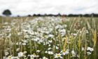 The study looked at weed burden in wheat crops at Rothamsted's Broadbalk wheat trial.