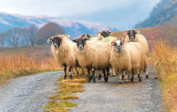 The Government's pledges include a commitment to reform crofting legislation.