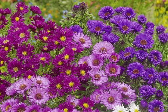 Gardening: 8 Colourful Plant Collections