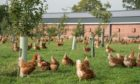 Poultry and captive birds will be allowed outdoors again from March 31.