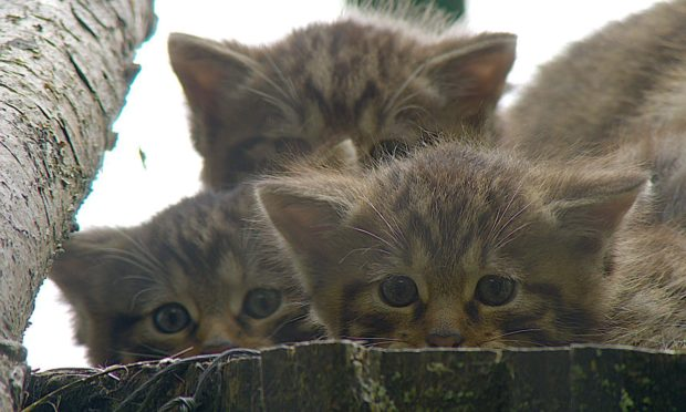 Neill and siblings. Saving Wildcats