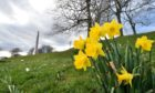 Spring is in full bloom at Duthie Park, Aberdeen. Picture by Scott Baxter.