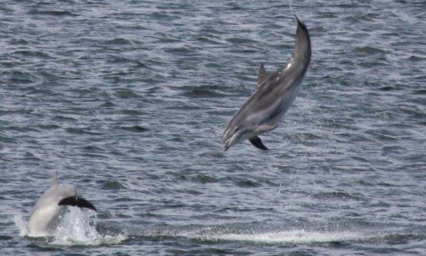 Dolphin Watch, started at Torry Battery in 2013, will mark its final year with an online festival