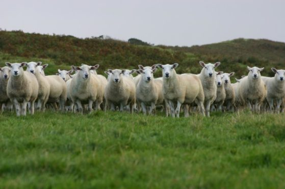 Rams are sought for the next phase of the project.