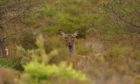 The Scottish Gamekeepers Association is against changes to the cull season for female deer.