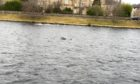 Otters spotted in the water near the Ness Bank Church.