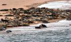 Seals at Newburgh beach.