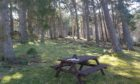 Tomrichton Wood in Braemar is now owned and managed by the community.