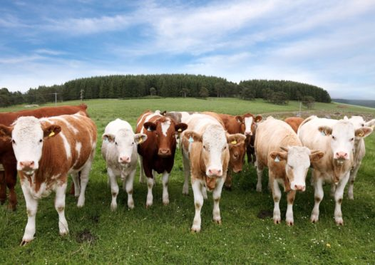 Scottish Government officials have been accused of blocking proposals to help the beef sector reduce its emissions.
