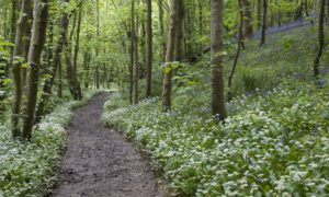By last autumn, the effects of relentless wet weather and an effective doubling or even trebling of visitor numbers year-on-year were easy to anticipate but difficult to alleviate
