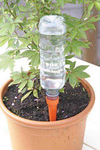 Automatic Watering Spikes.