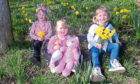 Pictured are from left, Amelia, 5, Estee, 2 and Daisy, 3 Wyness in the daffodils on Riverside Drive, Aberdeen.