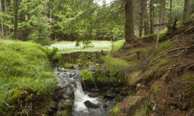 A small waterfall runs from a forest pool along the route up Ben Newe, near Strathdon.