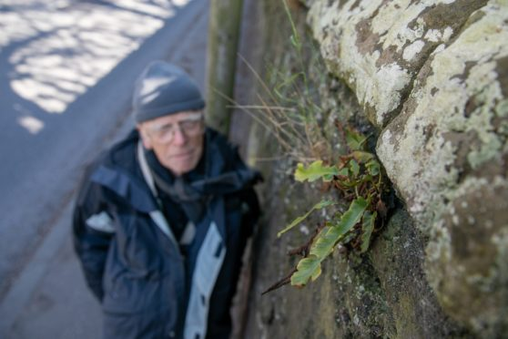 Brian Ballinger has been recording the wild plants in railway stations and on walls