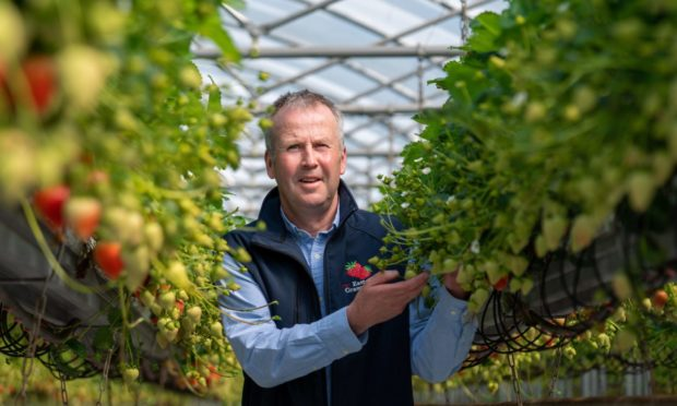 TUNNEL VISION: The NFU's new horticulture group chairman, Iain Brown, on his farm Easter Grangemuir near Pittenweem.