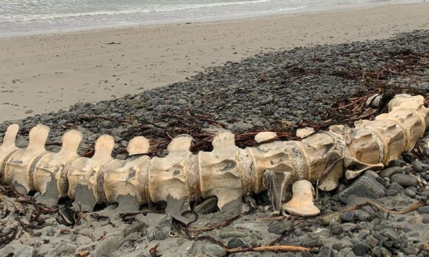 Sperm whale remains found on South Uist beach leads to speculation it could be 'Nessie's cousin'