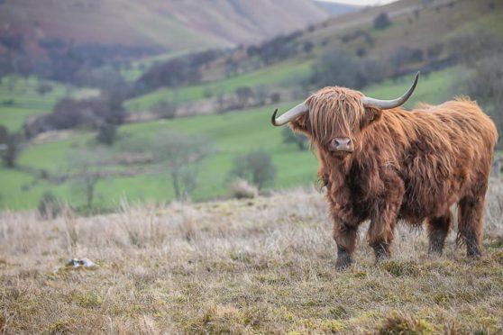 NFFN has more than 2,000 farmer members across the UK.