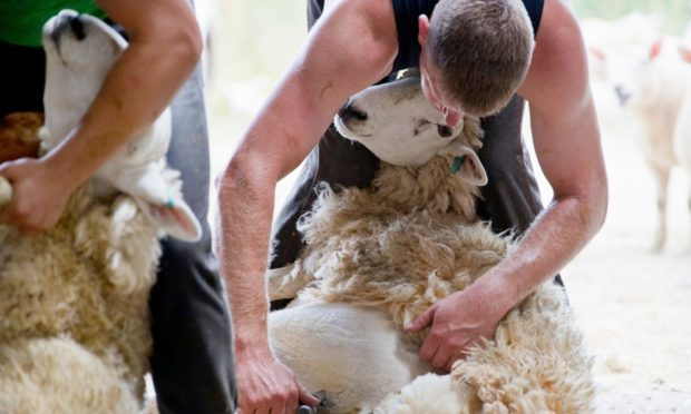 International shearers will need a contract of employment in order to enter the country.