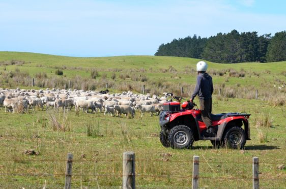 The average Scottish farm business income fell by more than a third last year.