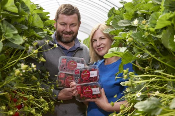 Ross and Anna Mitchell with their berries featuring the new logo.
