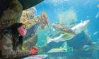 Gayle checks out the impressive kelp tank at Macduff Marine Aquarium.