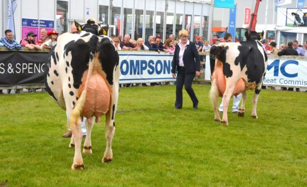 Dairy cattle judging at a previous Balmoral Show.