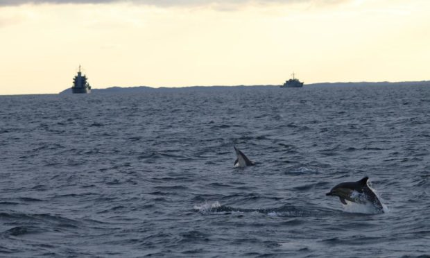 Common dolphins with warships in the background (c) Hebridean Whale and Dolphin Trust