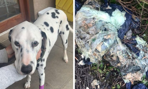 Dalmatian had 18 inches of intestine removed after eating fly-tipped rubbish in Aberdeen field (PIC: Deadline News)