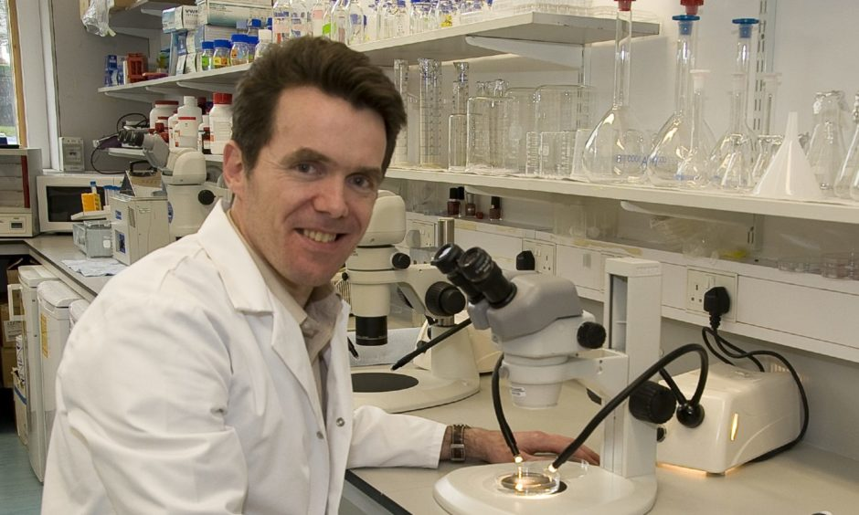 Dr Neil Vargesson FRSE in the lab at Aberdeen University.