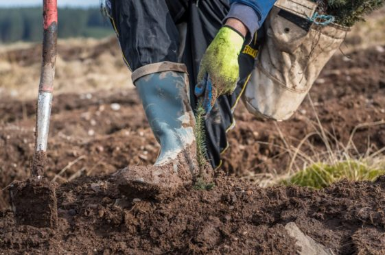 NFU Scotland vice-president Andrew Connon is concerned about whole farms being planted with trees.