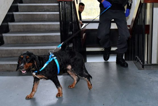 Sniffer dogs uncovered the cocaine at a Highland post office. Picture by Kath Flannery