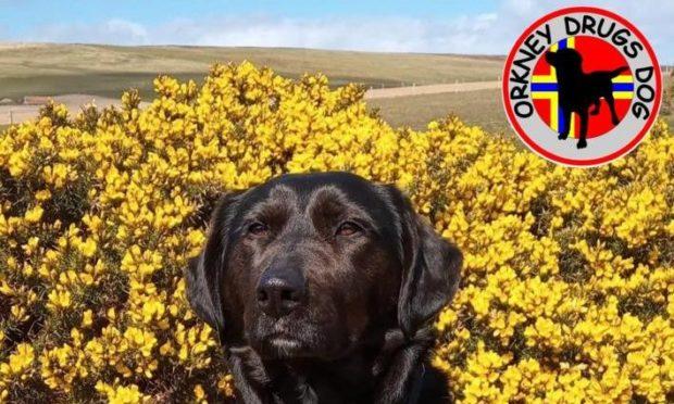 Orkney drugs dog Zoe