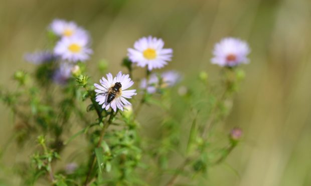Logging bee sightings in the app can help conservation efforts