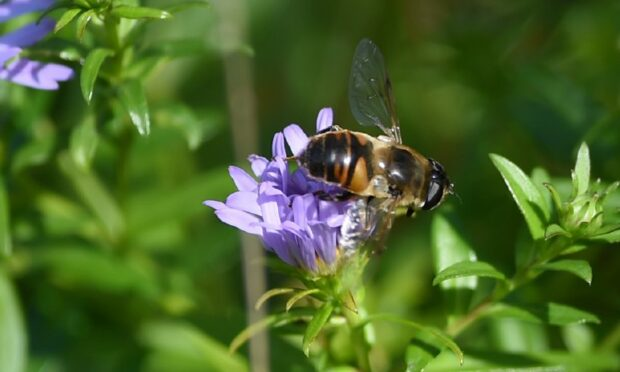 Concerns raised over impact windfarms could have on insects.