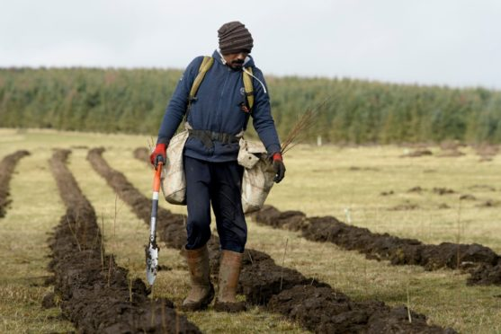 All political parties seem to agree on the need to plant more trees in Scotland.